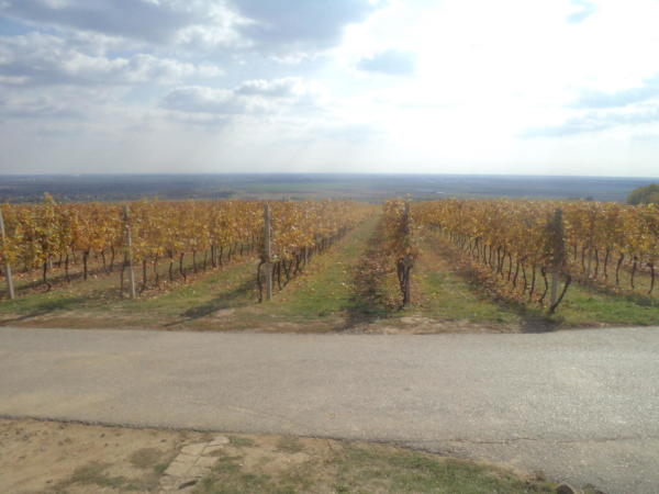 Kneževi vinogradi