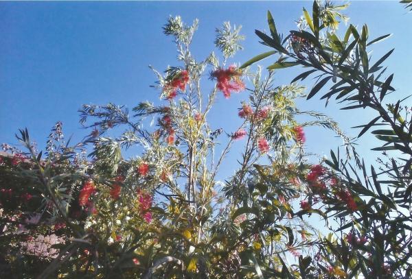Interesantno cvijeće Etiopije-Cvjetna kefa