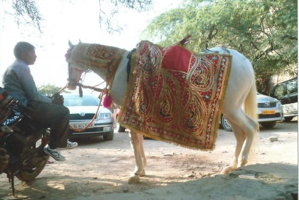 Okićeni bijeli konj na kojem jaše mladoženja noseći u rukama malo dijete