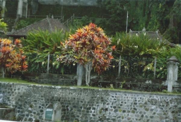 Cvjetni aranžmani uz palaču Tirta Gganga