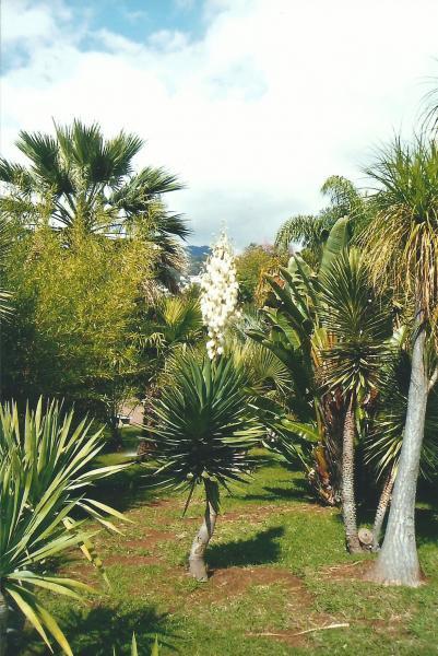 Interesantne palme