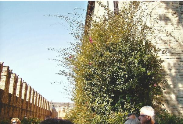Fontaneleto-viseći vrtovi