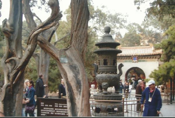 Peking-Zabranjeni grad (drvo ljubavi)