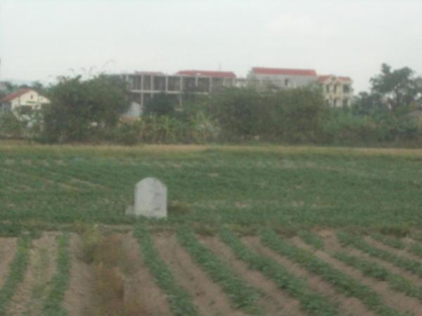 Grob u rižinom polju