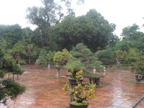Vrt sa bonsai drvečem.