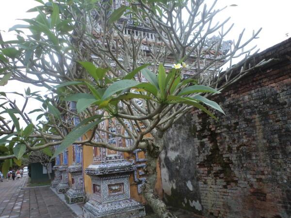 Drvo sa cvijetom Lilyvady